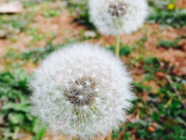 Alergia ocular: tipos de alergia y cómo prevenirlas